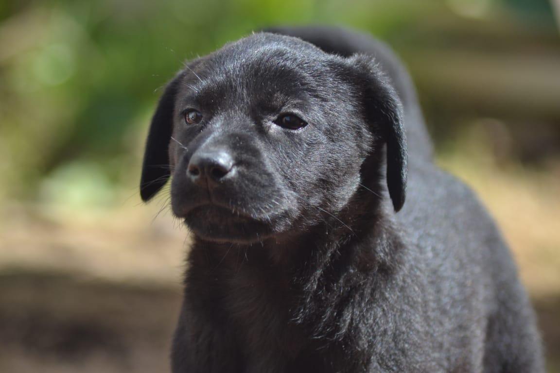 Adoptame!
